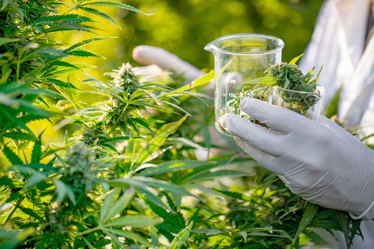 Prevalent Cannabis Threats